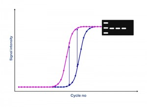 1-Principle-graph