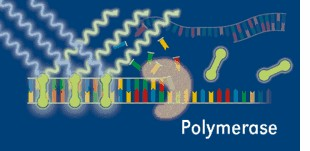 Polymerase realtime pcr